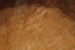 Gouden Eiken Dwarsdoorsnede met Donkere Horizontale Lijn Stock Foto