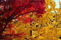 Gouden en rode bladeren in Kyoto, Japan Stock Afbeeldingen