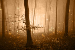 Gouden fantasiebos met glimwormenlicht Stock Foto