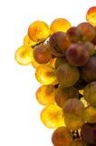 Gouden geïsoleerde druif - royalty-vrije stock fotografie