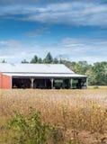 Gouden gebied met een rode schuur en landbouwbedrijfhulpmiddelen royalty-vrije stock afbeelding