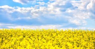 Gouden gebied van bloeiend raapzaad met mooie wolken op hemel stock afbeeldingen