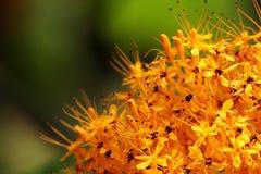 Gouden gele bloemen Stock Fotografie