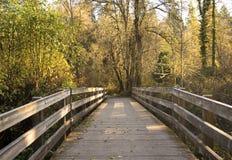 Gouden gloed in de het bos, achtergrond van de dalingsbrug, de dalingsaard, de houten brugdetails, de vrede en de schoonheid van  stock afbeeldingen