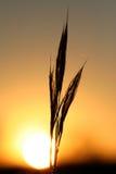 Gouden gloeiende zon en silloue Royalty-vrije Stock Foto's
