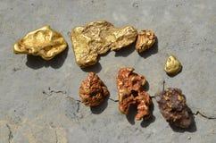 Gouden goudklompjes, gouden specimen wat met rode grond van de goudvelden van Westelijk Australië Royalty-vrije Stock Foto's
