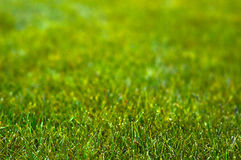 Gouden groene grasachtergrond Stock Fotografie