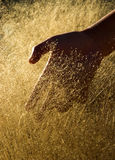 Gouden hand Royalty-vrije Stock Afbeelding