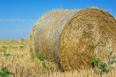 Gouden Hay Bales royalty-vrije stock foto's