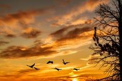 Gouden hemel op zonsondergang of zonsopgang met vliegende vogels natuurlijke backgr royalty-vrije stock afbeeldingen