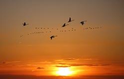Gouden hemel op zonsondergang of zonsopgang met vliegende vogels natuurlijke backgr stock afbeeldingen
