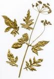 Gouden herbarium Stock Afbeeldingen