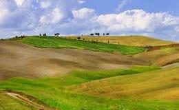 gouden heuvels van Orcia Stock Afbeeldingen