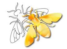 Gouden honingbijbaarmoeder op witte achtergrond Stock Fotografie