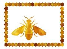 Gouden honingbijbaarmoeder op witte achtergrond Stock Afbeeldingen