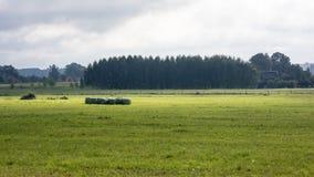 Gouden hooibalen in platteland Stock Afbeelding