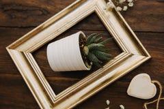 Gouden kader met bloempot stock foto's