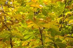 Gouden kleurenbladeren in de herfst Royalty-vrije Stock Afbeelding