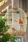 Gouden kooi met heldere papegaaien stock fotografie