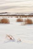 Gouden Licht op een Bevroren Meer Stock Foto