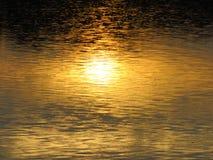 Gouden licht in water en glans in het moeras stock foto