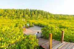 Gouden mangrovegebied of Tung Prong Thong Stock Afbeeldingen