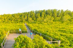 Gouden mangrovegebied of Tung Prong Thong Stock Foto's