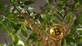 Gouden Model van Digitale Betaling Bitcoin tegen Houseplant stock videobeelden