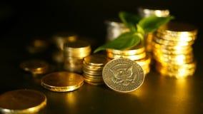 Gouden muntstukken en groen blad van spruit op zwarte achtergrond Succes van van het van de financiën bedrijfs, hypotheek en bank stock video