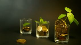 Gouden muntstukken in glas en groen blad van spruit op zwarte achtergrond Succes van financiënzaken, investering, ideeën stock videobeelden