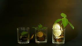 Gouden muntstukken in glas en groen blad van spruit op zwarte achtergrond Succes van financiënzaken, investering, ideeën stock video
