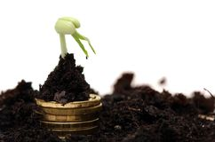 Gouden muntstukken in grond met jonge plant Geld Royalty-vrije Stock Afbeelding