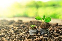 Gouden muntstukken in grond met jonge plant Het concept van de geldgroei stock afbeelding