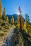 Gouden net bos in de herfst in Zwitserse bergen, zonnestralen, blu royalty-vrije stock foto