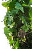Gouden Nieuwjaarsymbool Royalty-vrije Stock Afbeeldingen