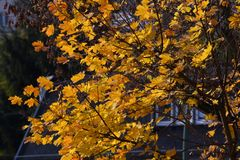 Gouden Oktober 2016 in Berlin Spandau, Duitsland Royalty-vrije Stock Afbeeldingen