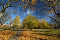Gouden Oktober 2016 in Berlin Spandau, Duitsland Stock Afbeeldingen