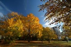 Gouden Oktober 2016 in Berlin Spandau, Duitsland Stock Foto
