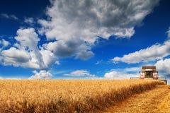 Gouden oogst Stock Foto