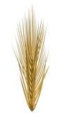 Gouden oor van tarwe Stock Afbeelding