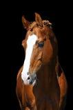 Gouden paard dat op zwarte wordt geïsoleerdr Royalty-vrije Stock Afbeeldingen