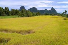Gouden padieveld en bergketen op achtergrond Royalty-vrije Stock Foto
