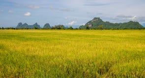Gouden padieveld met mooie wolken en hemel Stock Fotografie