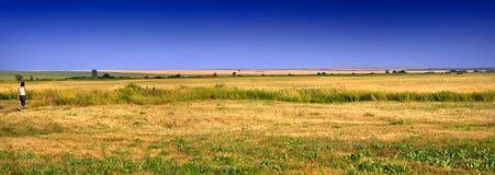 Gouden panoramisch gebied Royalty-vrije Stock Afbeeldingen