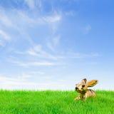Gouden Pasen konijntje op een helder gebied Stock Foto's