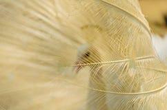 Gouden peafowl staart-veren Royalty-vrije Stock Afbeeldingen