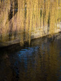 Gouden regen bij de rivier Stock Afbeelding