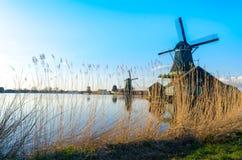 Gouden riet die door de historische windmolens in Zaanse Schans, Nederland groeien royalty-vrije stock fotografie