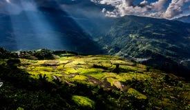 Gouden rijst terrasvormige gebieden bij het oogsten van tijd Stock Fotografie