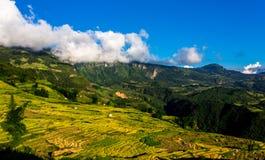 Gouden rijst terrasvormige gebieden bij het oogsten van tijd Royalty-vrije Stock Afbeeldingen